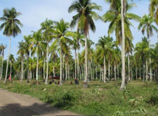Samal Lot For Sale 1