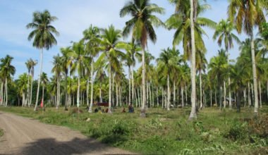 Samal Lot For Sale 1 property in Davao City