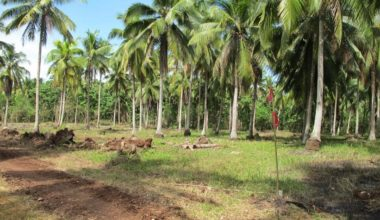 Samal Lot For Sale 23 property in Davao City